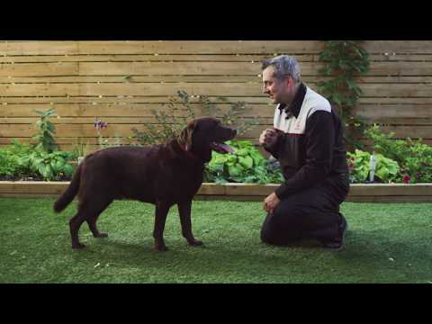 Honda Parts & Service – Puppy Training