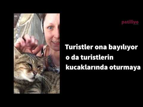O, Ayasofya'nın meşhur kedisi!