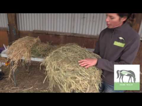 How To Choose The Right Hay For Your Horse