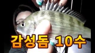 BJ바다)통영 냉장고 포인트 감성돔 10마리 바다 원투…