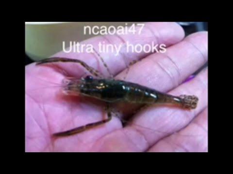 Fishing - Ultra Tiny Fishing Hooks -Fishing Tips - Lưỡi câu Tôm - Lưỡi câu Nhỏ nhất