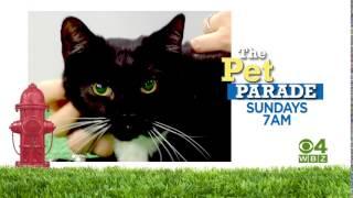 WBZ Promo:  Lucky Dog & Pet Parade (:15)