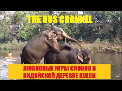 А слоники размножаются тоже Индия Гоа