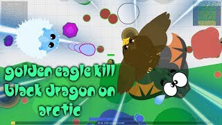GOLDEN EAGLE KiLL Black Dragon in the ARCTIC!?!//FUNNY MOMENTS + TROLLING ANIMAL IN MOPE.IO//Clan-MF