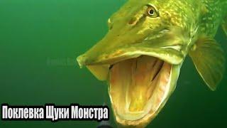 Рыбалка ЗРЕЛИЩНАЯ ПОКЛЕВКА ГИГАНТСКОЙ ЩУКИ МОНСТРА весом более 21 КГ Подводная съёмка