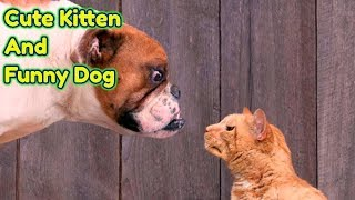 Cute Kitten And Funny Dog