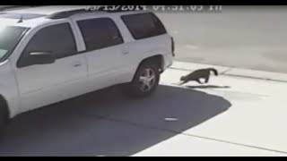Cat Saves Boy From Dog ( Slow Motion!! )