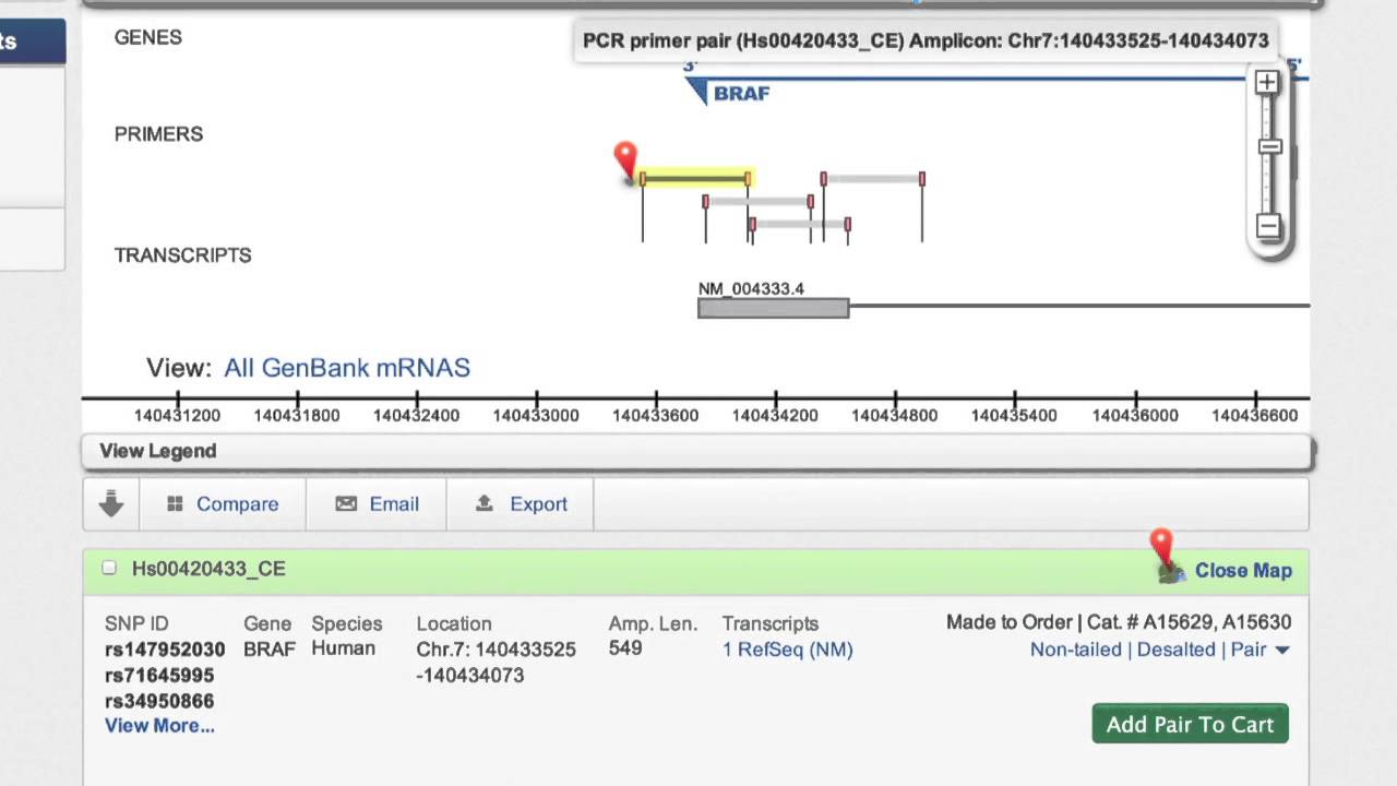 Primer Designer Tool For Pcr Sequencing Thermo Fisher Scientific Us