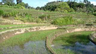 Sri Lanka,ශ්රී ලංකා,Ceylon,Beautiful Rice Paddy Terraces (08)