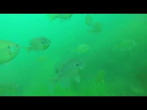 Eagle Lake MN Dive - July 2016 (Freshwater Coral!)