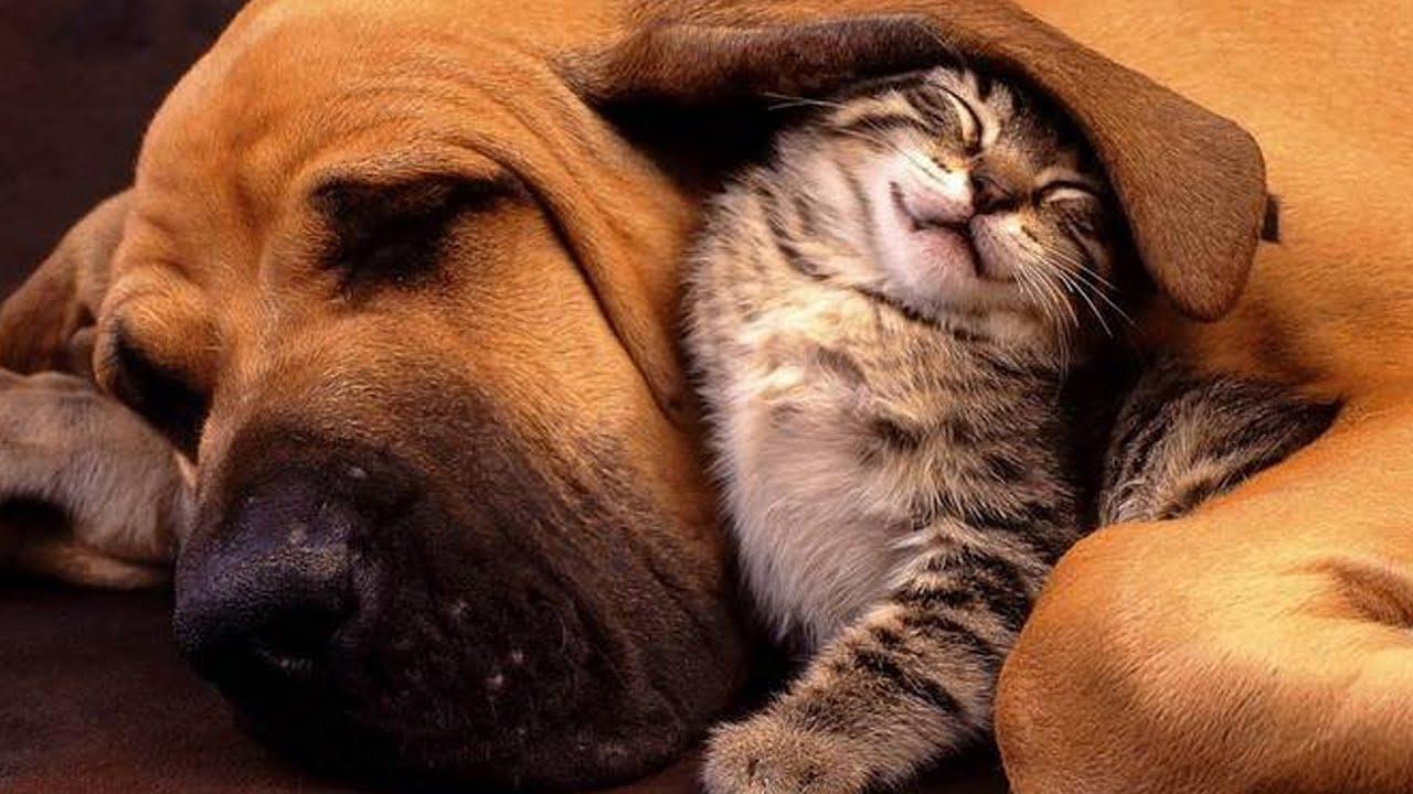 Брату днем, картинки с надписями кошки собаки