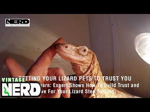 Getting Your Lizard Pets To Trust You