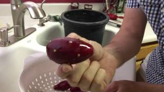 Prickly Pear Fruit (Tunas) Harטest and Cleaning Part 1