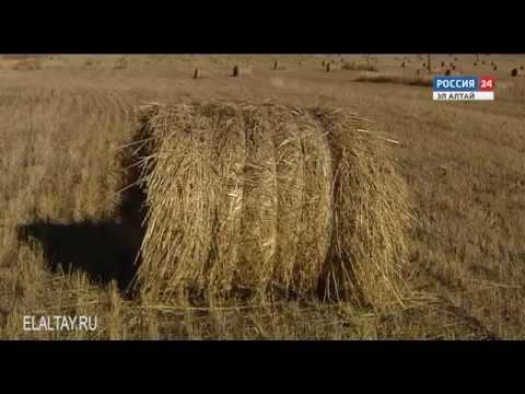 Новшество в налоговом законодательстве для плательщиков единого сельхозналога