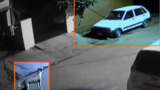 How a Dog Stopped Thief From Stealing a Car in Lucknow | CCTV Video