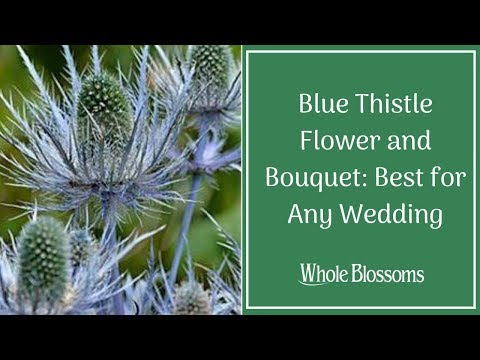 Blue Thistle Flower And Bouquet: Best For Any Wedding