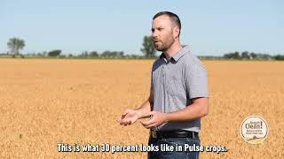 Pre-Harvest Glyphosate Application in Pulse Crops