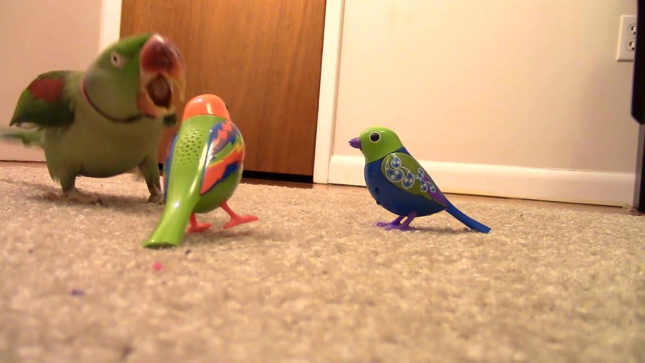 Parrot Brutally Attacks Fake Singing Birds