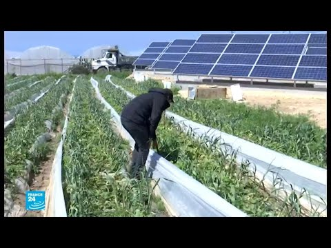 الاقتراب من الأراضي الحدودية الزراعية لريها مخاطرة في غزة..كيف تم الحل؟
