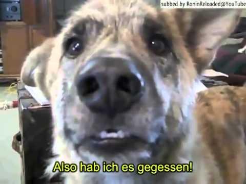 Talking Dog - Sprechender Hund (+Deutschen UT!)