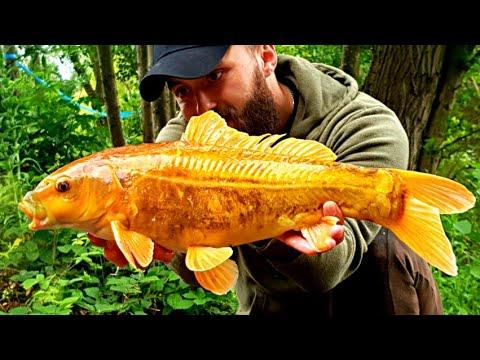 *Carp Fishing* .....now That Was A Pretty Little Fish! - Cobbleacre, Adam's Lake - Norfolk UK