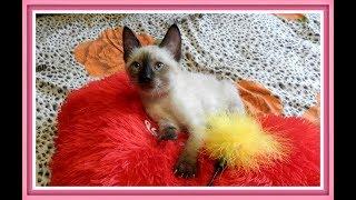 Самые красивые имена для кота  ТОП 10 /Клички,имена для котов/ Как назвать кота