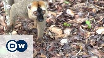 Die Rote Liste gefährdeter Arten | Global 3000