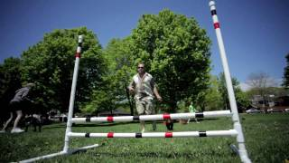 Obedience Training For Your Dog, Boot Camp Exercise For You.