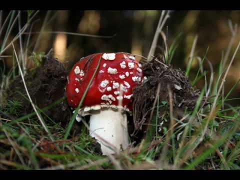 Reino Fungi: Hongos