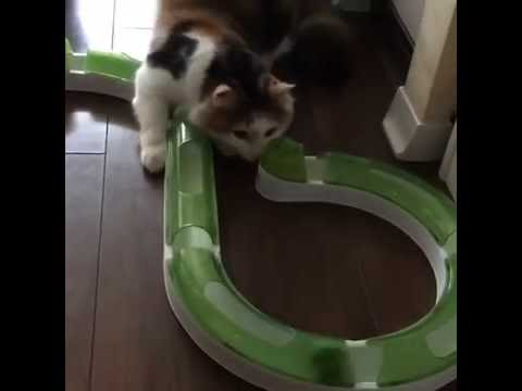 Cat playing with the Catit Senses 2.0 Circuit