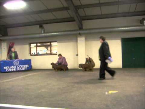 Midland Counties CH Dog Show Sussex Spaniel Best of Breed & Best Puppy