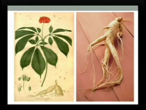 Ginseng 101- An Introduction Ginseng By Will Hsu