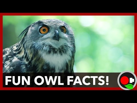 6 Cool Owl Facts (A Fun Kid-Friendly Version)
