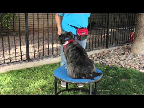 How To Train Your Dog To Count : Dog Training & Basic Obedience