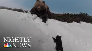 Viral Video Shows Mighty Bear Cub Aiming To Reach Parent Atop Snowy Mountain | NBC Nightly News