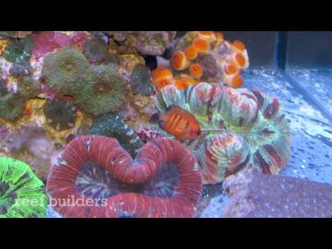 Reef Builders' Lounge At Reefapalooza Costa Mesa, CA
