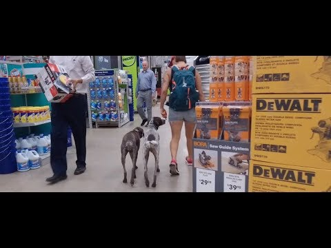 Best Dog Training in Columbus, Ohio! 2 Year Old German Shorthaired Pointer, Otto!