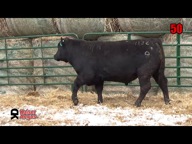 Kaiser Angus Ranch Lot 50