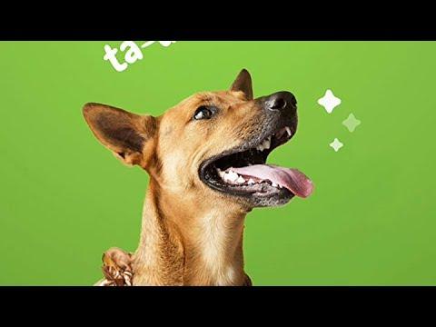Hip & Joint Support Dental Sticks for Dogs - With Hemp, Chondroitin,  Turmeric Curcumin & Bone Broth