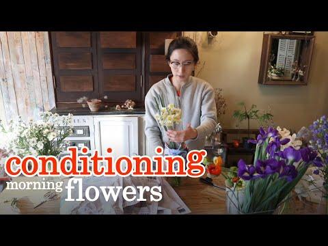 플라워레슨 28 꽃다듬기 & 꽃관리법(실키난,수선화,델피늄,양귀비,공작,아이리스)/Flowerlesson 28 Flower conditioning