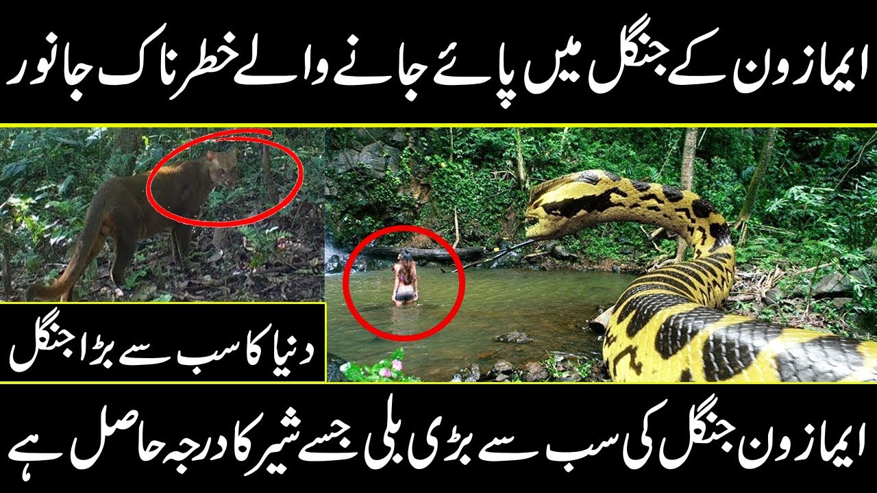 amazing and uncovered facts about world largest amazon jungles and biggest animals   Urdu cover