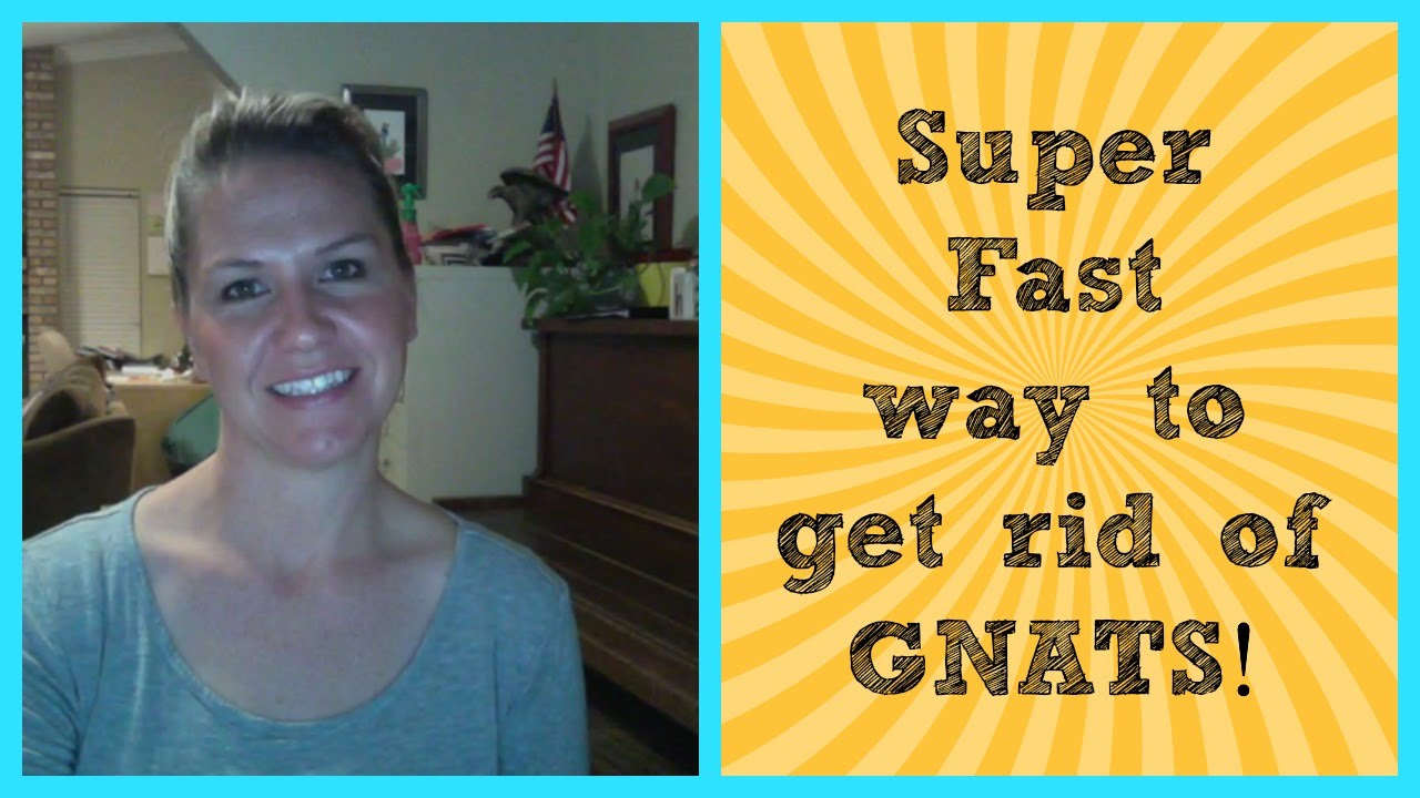 SUPER FAST Way To Get Rid Of GNATS!!! - YouTube