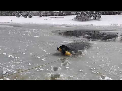 Rescue crew saves dog from frigid, icy Colorado lake