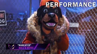 """Rottweiler sings """"Maneater"""" by Hall & Oates 