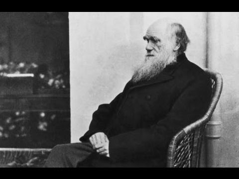 What Is Evolution? Charles Darwin's Brilliant Idea Explained