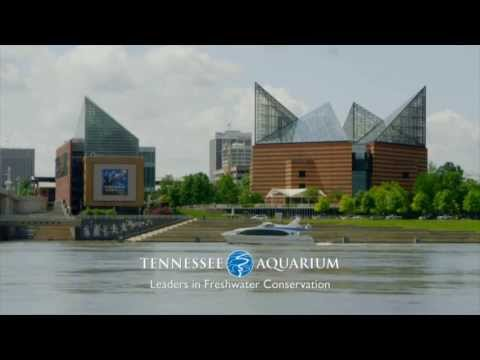 Tennessee Aquarium - Leaders in Freshwater Conservation