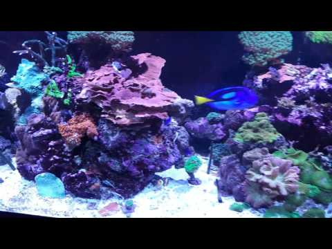 Repeat Kessil A360W-E series  by Robert Landis - You2Repeat