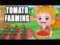 Baby Hazel Tomato Farming | Fun Game Videos By Baby Hazel Games