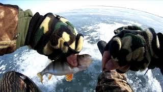 ТАКОГО КЛЕВА ОКУНЯ Я НЕ ОЖИДАЛ ТРОФЕЙНАЯ зимняя рыбалка 2020 Казахстан Кокшетау оз Копа