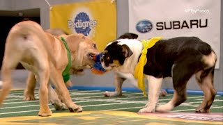Game Day Revisited: Puppy Bowl XII: A Year of Firsts